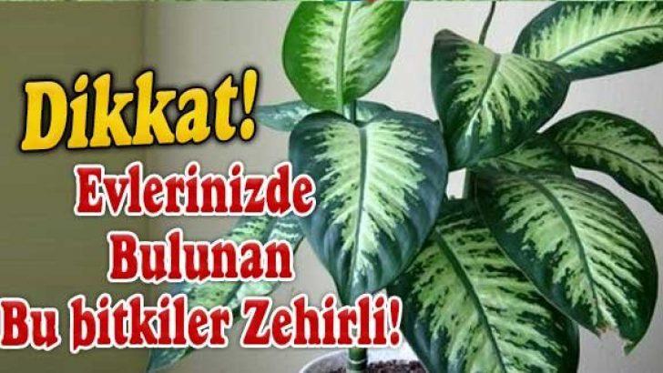 Zehirli Bitkilere Dikkat!