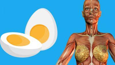 Günde 2 Yumurtanın Vücuda Faydaları Nelerdir?