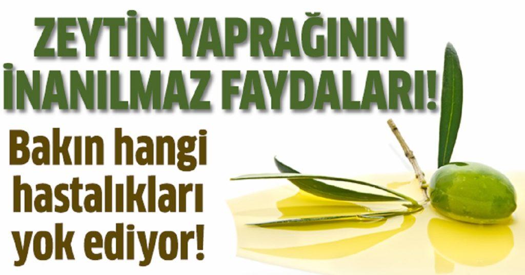 Zeytin Yaprağının Faydaları – Zeytin Yaprağı Çayı