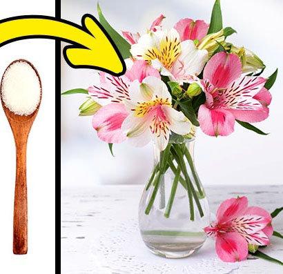 Şeker ile Çiçek Bakımı