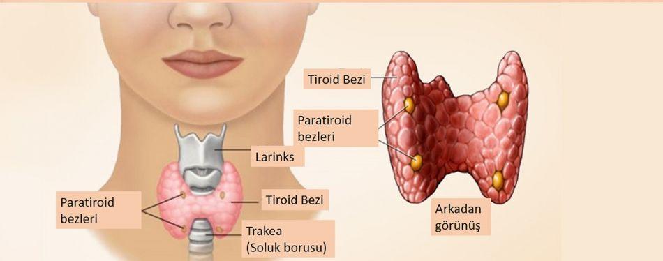 Tiroid Rahatsızlığı