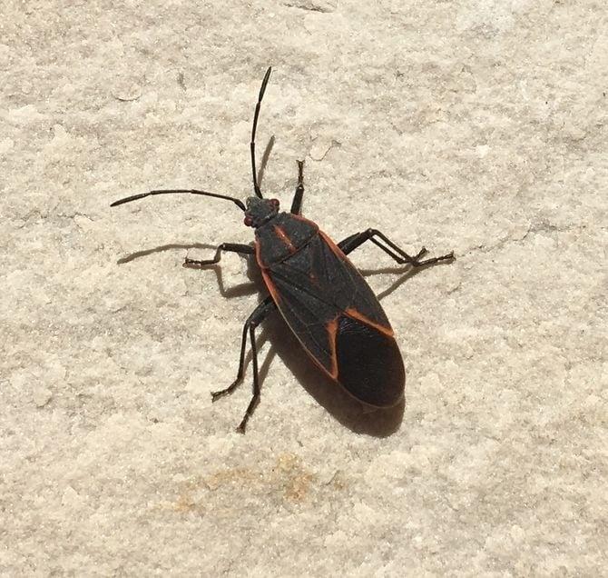 doğal böcek ilacı