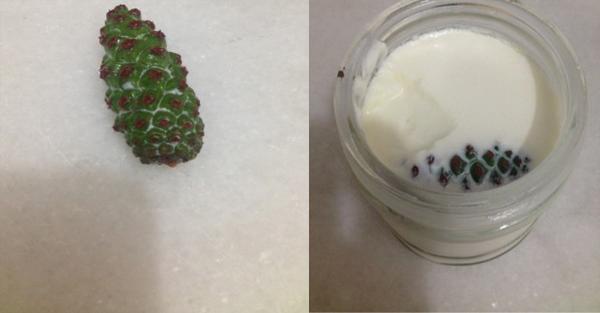 kozalak ile yoğurt mayalama
