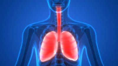 Harika Bir Akciğer Çayı: Astıma, Bronşite, Öksürüğe, Enfeksiyonlara