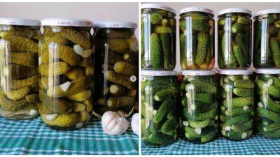 Salatalık Turşusu Yapımı ve Püf Noktaları
